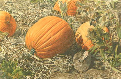 I - 62  Pumpkins And Cottontail