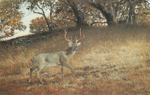 H-17  Whitetail Buck
