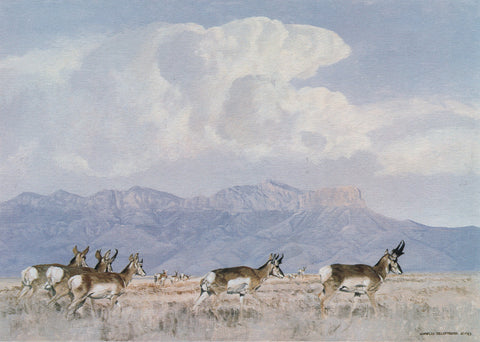 I-105  Pronghorns/Guadalupes