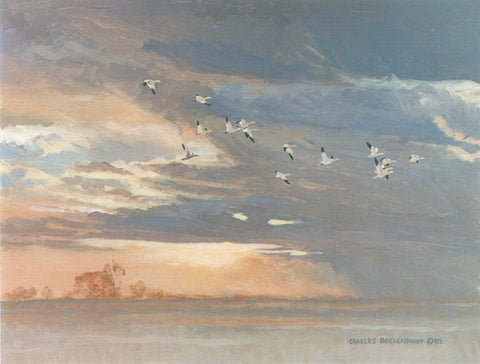 I-129  Snow Geese-Clouds