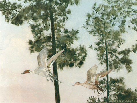 I-131  Pintails-Pine Trees