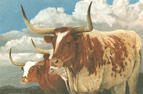 I - 73  Texas Longhorns