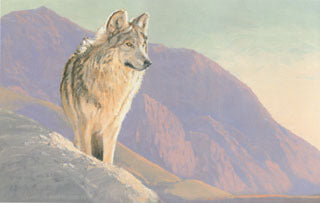 H-36  Mexican Gray Wolf