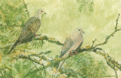 I - 26  Mourning Doves