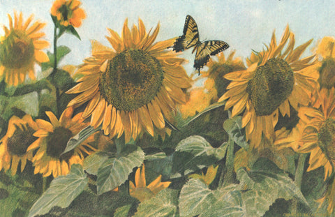 I - 58  Butterfly And Sunflowers