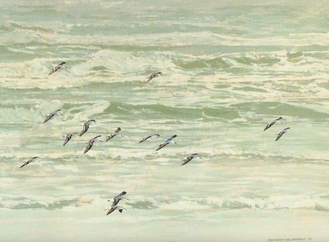 H-74  White-rumped Sandpipers