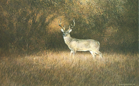 TQ17  Hill Country Whitetail