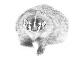 Badger B&W