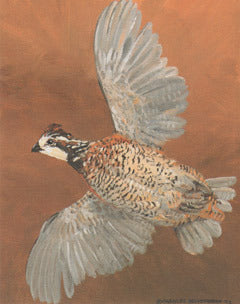 V-17  Bobwhite Flying