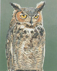 V-40  Great Horned Owl