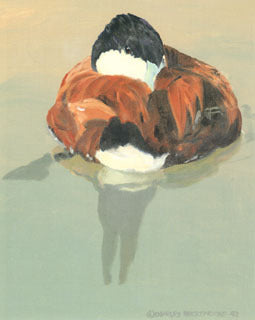 V-54  Ruddy Duck