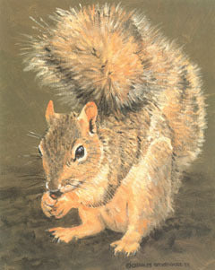 V-60  Squirrel