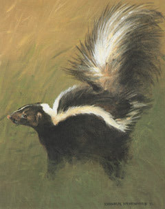 V-73  Striped Skunk