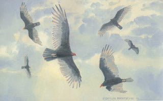 H-43  Turkey Vultures