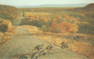 H-50  Turkeys-Road