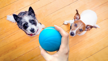 Load image into Gallery viewer, (Buy 2 Free Shipping&Buy 3 Get 4)Fun Toys & Pet Friends|Motion Ball
