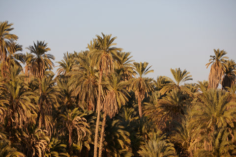 Palms II, The Nile, Egypt
