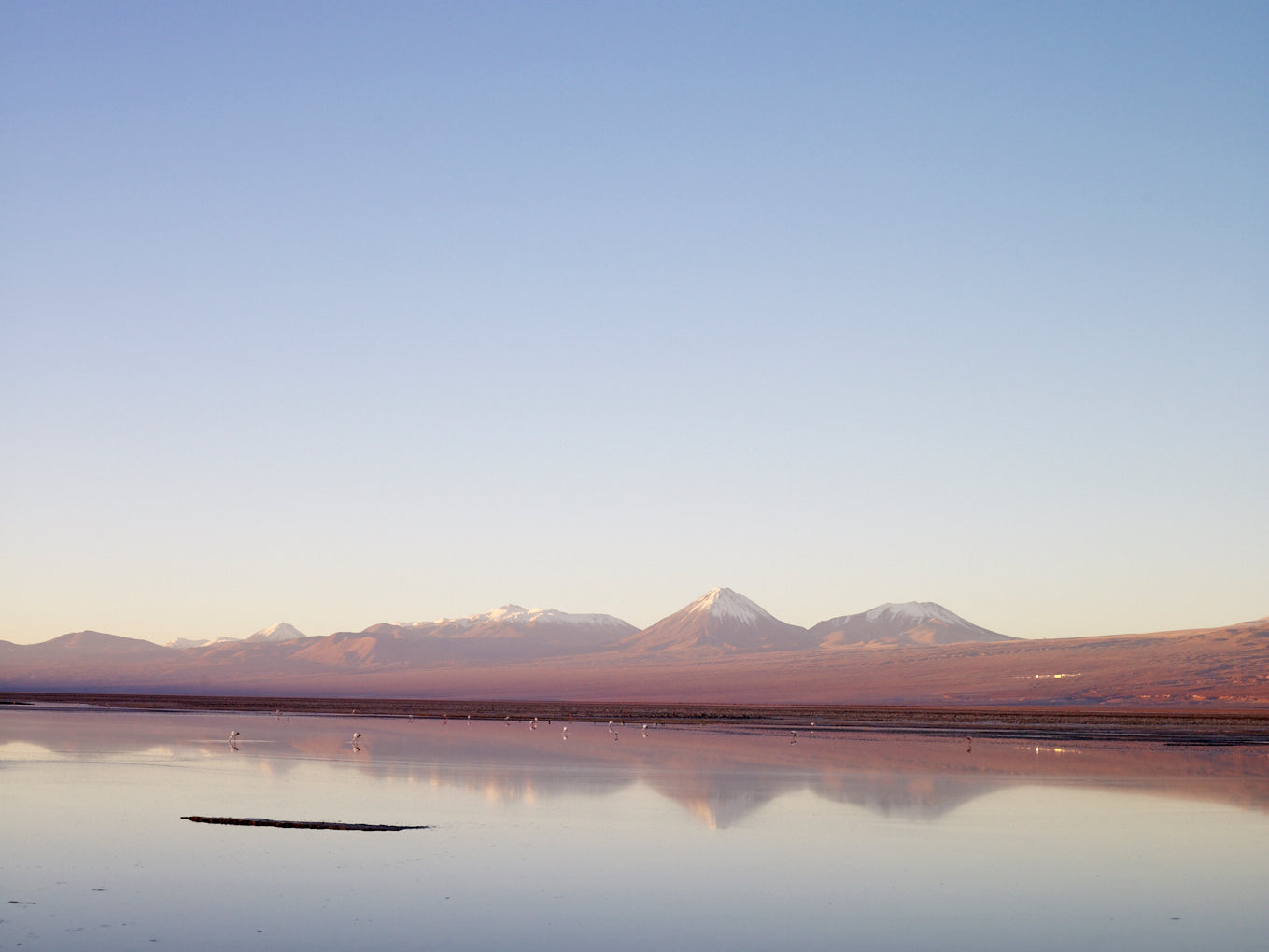 Flamingoes at dusk, Salar de Atacama, Chile