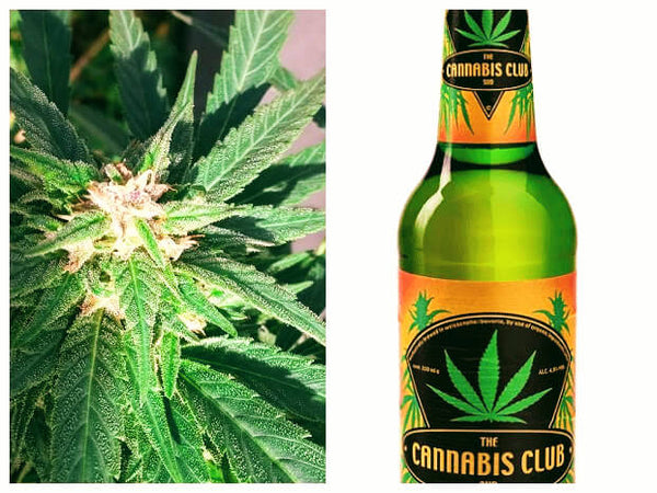 The Cannabis-Club-Sud Hanfbier Vegan - Shop4Denda