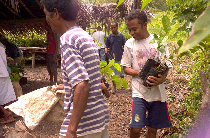 Saplings being distributed to Community Tree Corporative members to plant on their land.