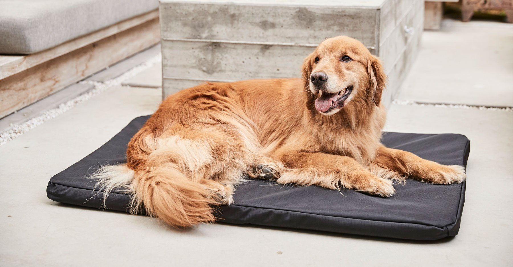 A golden retriever lying on a black rectangular crate pad