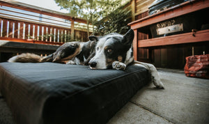 dog on a K9 Ballistics tough orthopedic dog bed