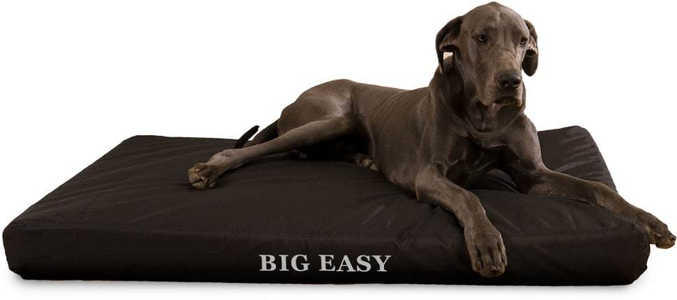 Pee Resistant Dog Beds