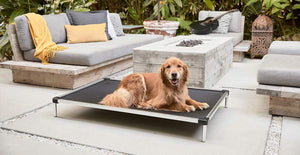 a golden retriever lying outside on a black chew proof cot dog bed