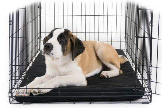 Tough Orthopedic Dog Crate Pad™