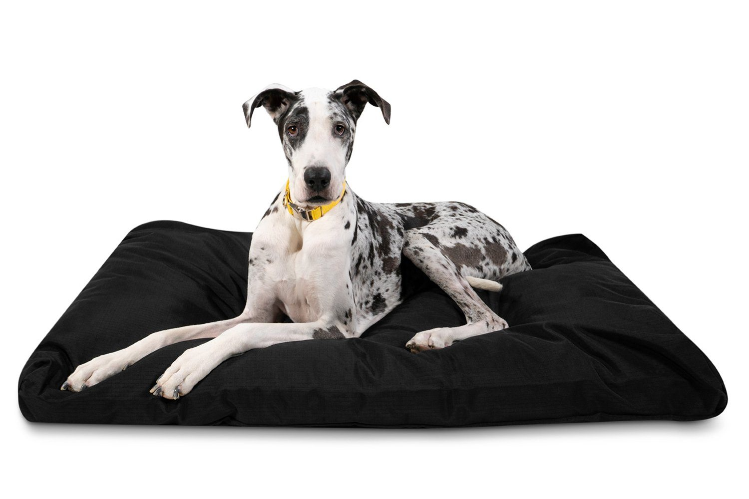 Great Dane is resting in large dog bed