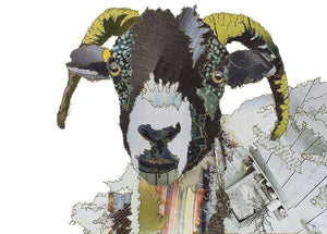 'Swaledale Sheep' - Greetings Card