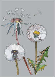 'Dandelion' - Greetings Card - CKHF02B