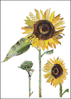 'Sunflower' - Greetings Card - CKHF04B