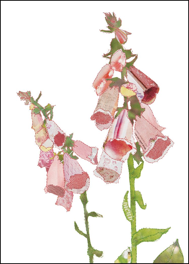 'Foxglove' - Greetings Card - CKHF07B