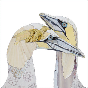 'Love Birds Gannets' - Greetings Card - CKBL06