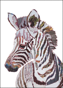 'Baby Zebra' - Greetings Card / Print - CKMB13