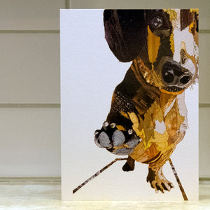 'Dachshund' - Greetings Card