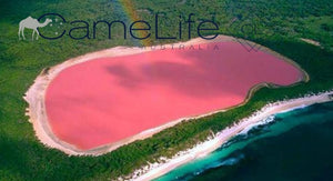 The Magic of Pink Algae!