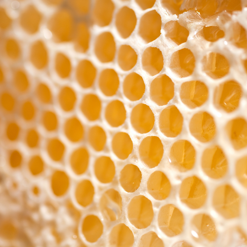 Image of beeswax; an essential ingredient of CameLife Restorative Day Cream