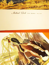 "Load image into Gallery viewer, Mallard Duck Print - Audubon Folio Collection - Anas Boschas - 17""x14"" Sheet - 100% Original - 1950s - Vintage Bird Prints - Animal Art"