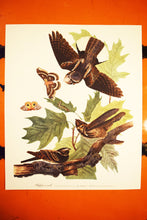 "Load image into Gallery viewer, WhipHoorWill Print - Audubon Folio Collection - Caprimulgus Vociferus - 17""x14"" Sheet - Original - 1950s - Vintage Bird Prints - Animal Art"