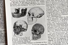 "Load image into Gallery viewer, Antique Human Anatomy Prints - Set of 6 Prints - Der Neue Brockhaus Lithograph - 5.75""x9.75"" - Printed in Germany - 1937-1938"