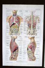"Load image into Gallery viewer, Abdomen Body Print - 10.25""x6.75"" - Set of 3 Antique French Lithographs - 1920s Larousse Medical - Printed in Paris, France - 100% Original"