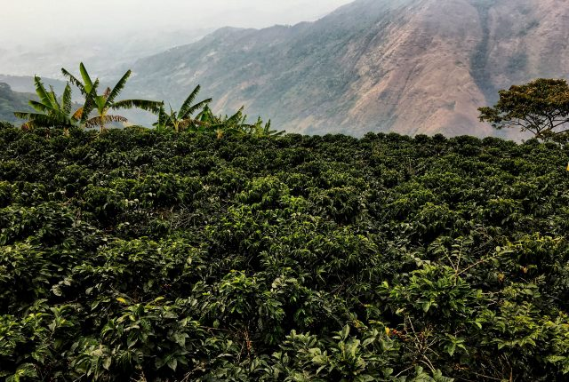 Decaf Colombia Organic