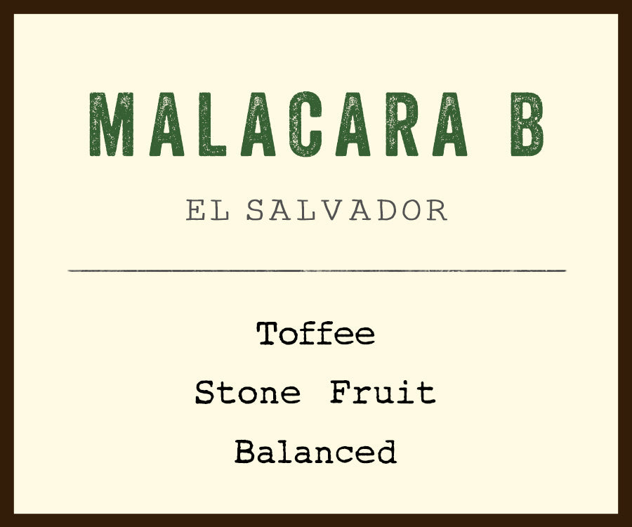 el salvador coffee malcara B