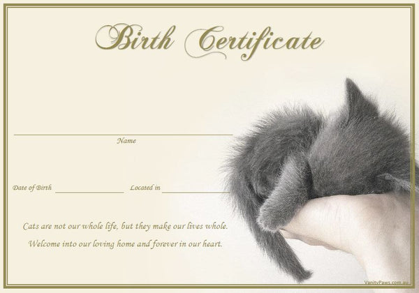 Birth Certificate - Grey Kitten