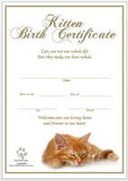 Birth Certificate - Kitten Ginger