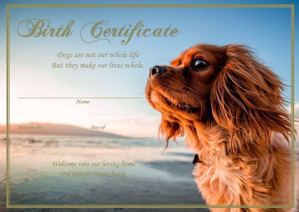 Birth Certificate - King Charles Cavalier