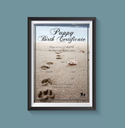 Birth Certificate - Puppy Beach