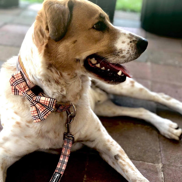 Tan Plaid Burberry Barkberry dog collar